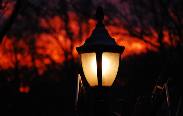 Картинка небо, деревья, парк, лампа, вечер
