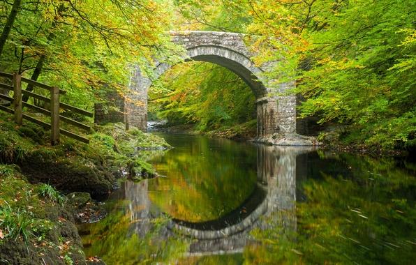 Картинка осень, лес, деревья, мост, отражение, река, Англия, арка, Devon, England, Девон, Дартмур, River Dart, Dartmoor, …