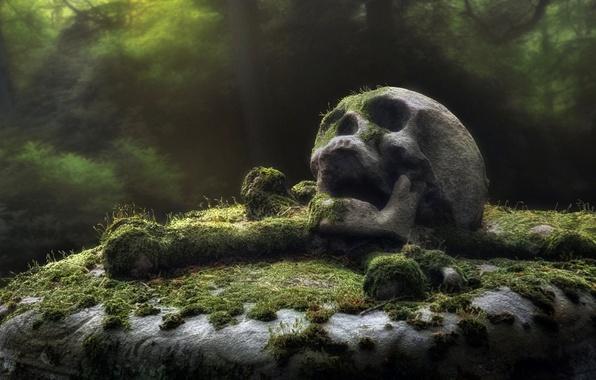 Картинка череп, памятник, кладбище