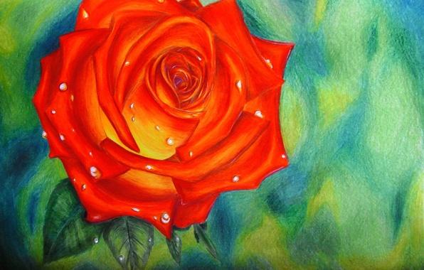 Картинка капли, рисунок, роза, красная, алая, Rose, Aileen
