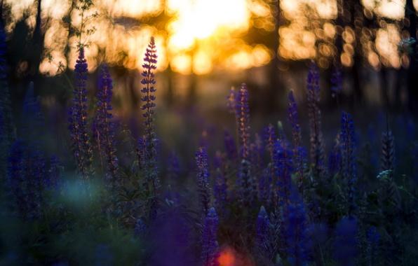 Картинка цветы, ночь, природа