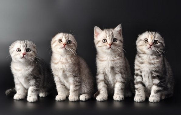 Милые Котята Обои Котят  wallpicnet