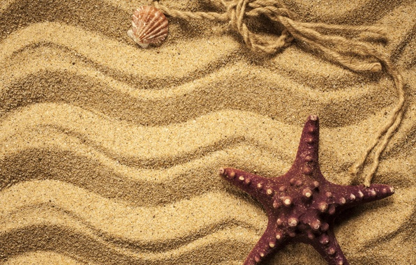 Картинка песок, ракушки, морская звезда, beach, texture, sand, marine, starfish
