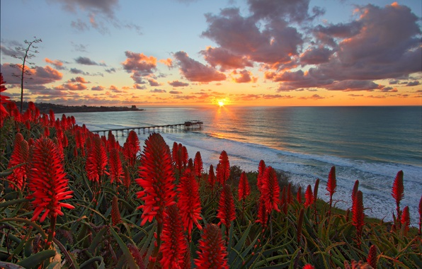 Картинка пляж, солнце, цветы, океан, рассвет, склон, горизонт, красные