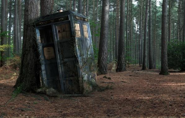 Фото обои Police Box, Tardis, Forest, Box, Tree