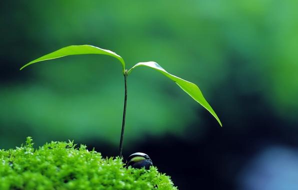 Картинка green, nature, plant, zen