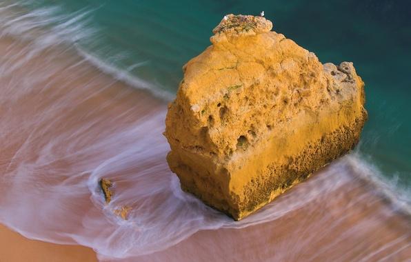 Картинка море, вода, птицы, скала, камни, океан, скалы, птица, берег, побережье, камень, чайки, чайка, прибой