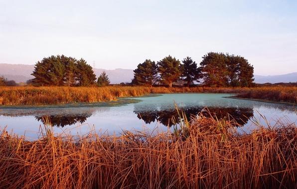 Картинка деревья, оранжевый, озеро, камыши