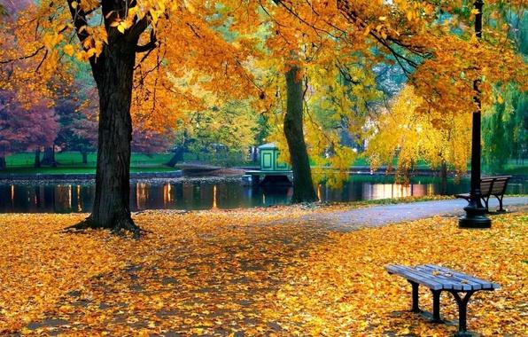 Картинка осень, деревья, природа, пруд, парк, листва