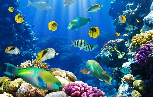 Картинка рыбки, подводный мир, underwater, ocean, fishes, tropical, reef, coral, коралловый риф