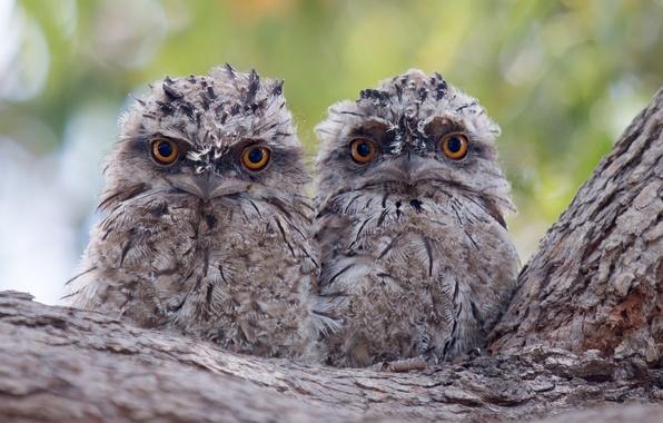 Картинка птицы, дерево, двое, парочка, птенцы