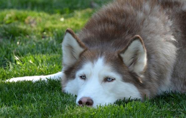 Картинка морда собаки