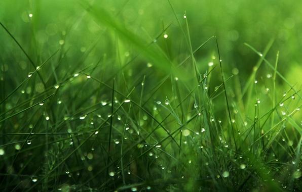 Картинка зелень, трава, капли, роса