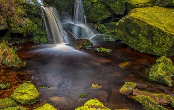 Картинка лес, вода, природа, камни, водопад, мох