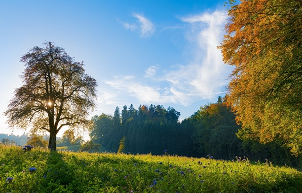 Картинка небо, солнце, облака, деревья, цветы, листва, Поляна