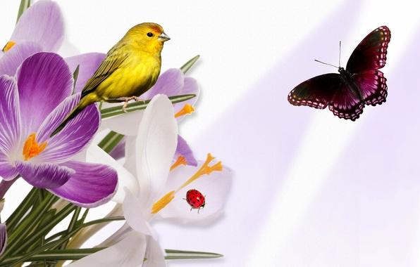 Картинка цветы, коллаж, птица, бабочка, божья коровка, крокус