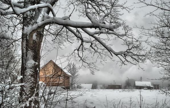 Картинка зима, снег, дерево, ветви, деревня, мороз, домики, Россия, Russia, trees, nature, winter, snow, village, frost