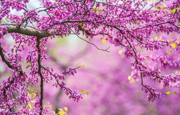 Картинка ветки, природа, дерево, весна, nature, tree, spring, branches