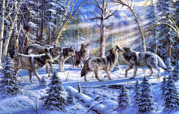 Картинка зима, лес, животные, природа, ель, стая, волки, живопись, ёлки, солнечные лучи, Ronnie Hedge, Kindred Spirits