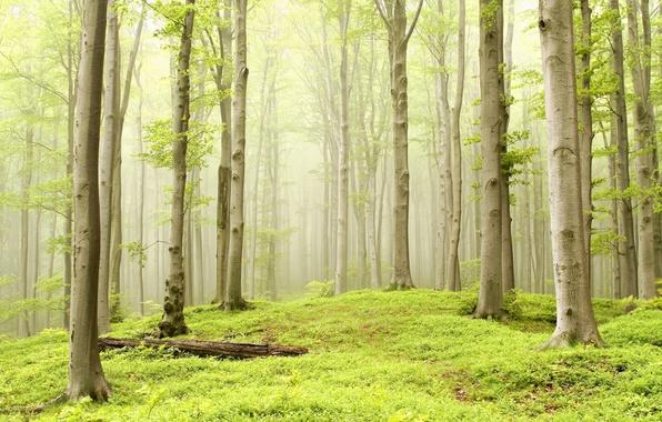 Лес деревья осина туман дымка трава