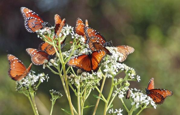Картинка бабочки, цветы, ветки, стебли, бутоны, flowers, branches, butterflies, buds, stalks