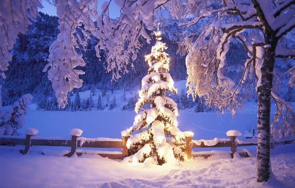 Картинка зима, снег, огни, елка