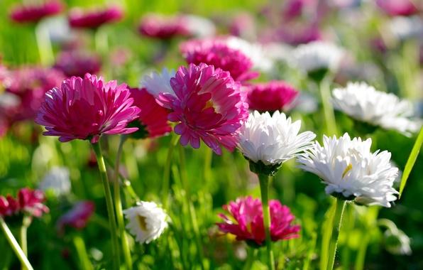 Картинка лето, цветы, природа, красота, весна, луг
