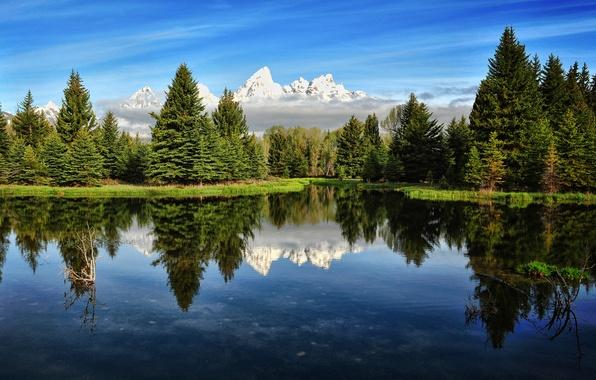 Картинка лес, небо, горы, река, утро, сша