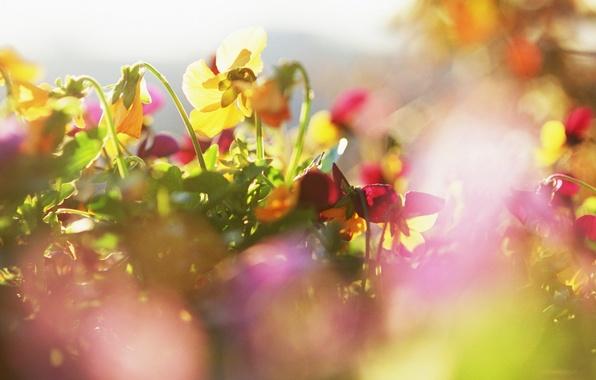 Картинка солнце, макро, лучи, Цветы, растения, лепестки, яркость