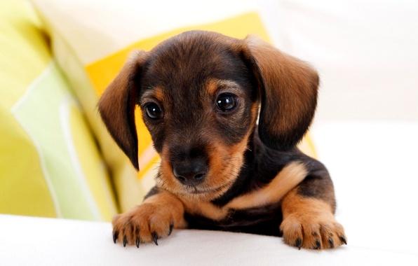 Картинка глаза, лапки, щенок, уши