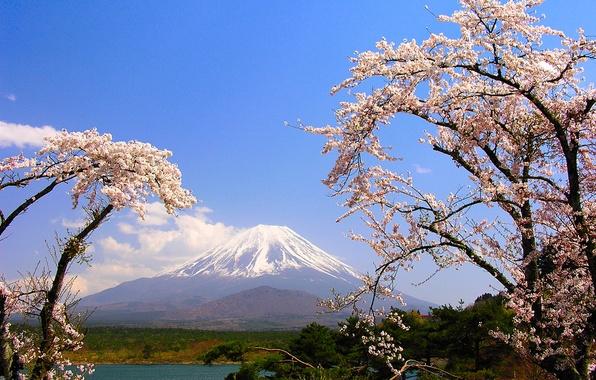 Картинка деревья, озеро, гора, весна, Япония, сакура, Фудзияма