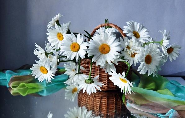 Картинка цветок, цветы, корзина, ромашки, букет, корзинка, полевые, красивые