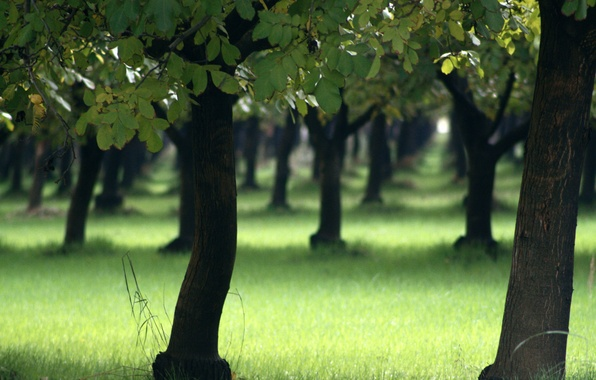Картинка лето, трава, деревья, природа, дерево, весна, леса, парки