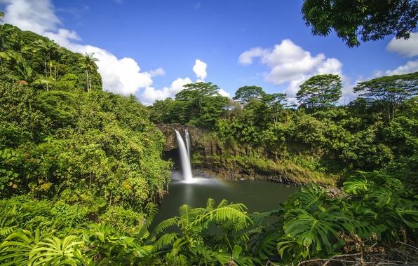 Картинка лес, тропики, водопад, Гавайи, Hawaii, Hilo, Rainbow Falls
