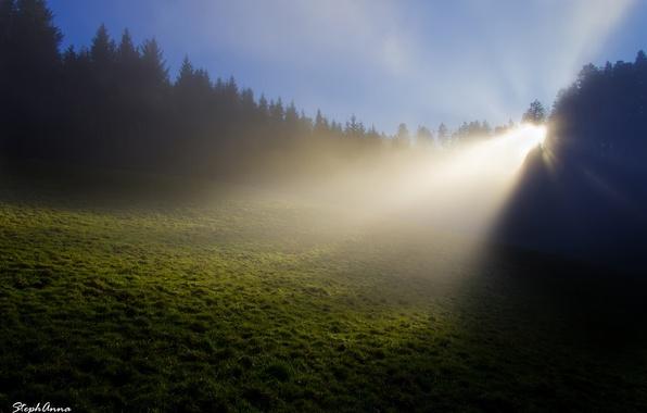Картинка лес, трава, лучи, свет, природа, туман, роса, поляна, Франция, утро, Stephan & Anna Gürtler photography