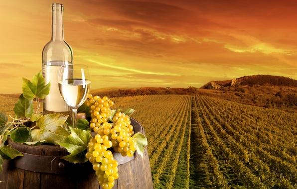 Картинка поле, листья, пейзаж, вино, бокал, бутылка, виноград, виноградник, бочка, плантация