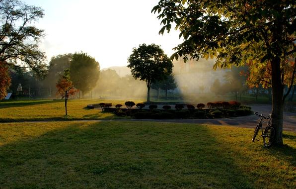 Картинка осень, трава, листья, солнце, лучи, деревья, велосипед, парк, дерево, рассвет, листва, grass, клумба, bike, park, ...