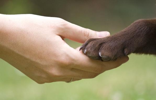 Картинка девушка, фон, друг, обои, настроения, человек, лапа, рука, собака, размытие, пес, wallpaper, друзья, широкоформатные, dog, …