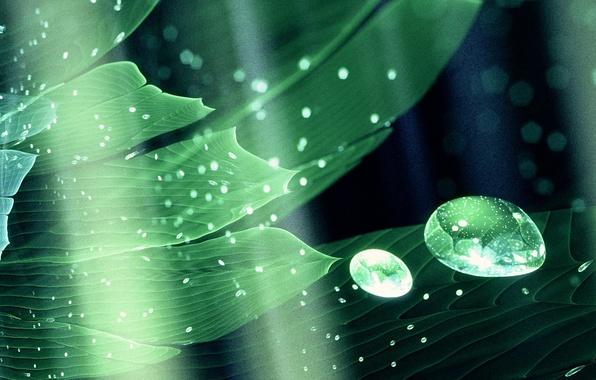 Картинка капли, свет, абстракция, лист, растение