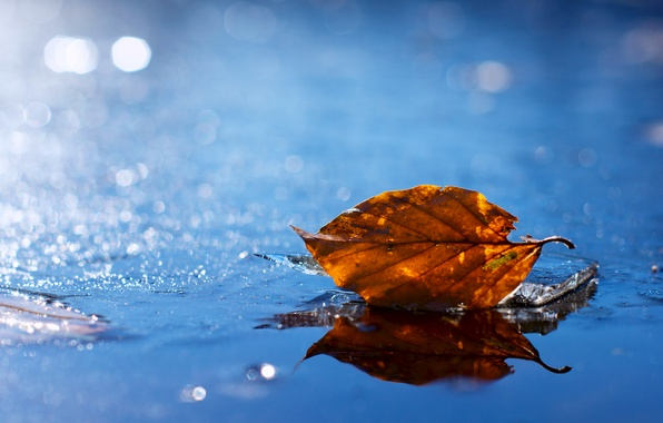 Картинка вода, желтый, лист, капельки, блики, листок, Осень, размытость, лужа, опавший, осенний