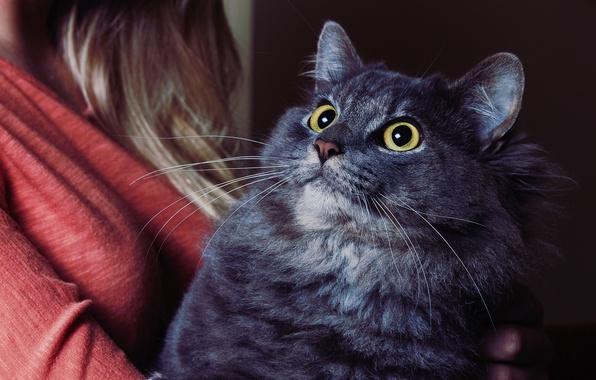 Картинка глаза, кот, усы, девушка, толстый