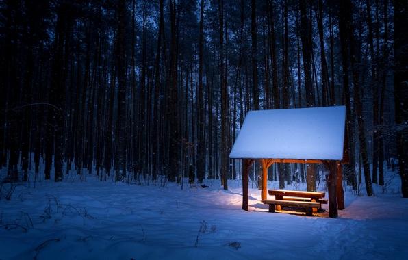 Картинка зима, лес, свет, снег, деревья, скамейка, снежинки, следы, стол, освещение, лавка, навес, кусты, скамья