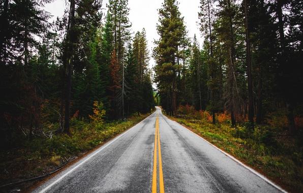 Картинка лес, деревья, природа, Дорога