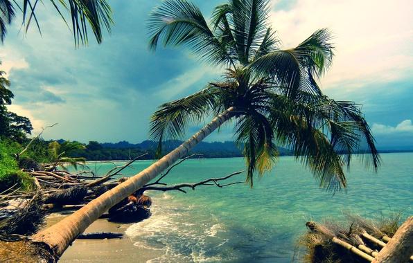 Картинка пляж, пейзаж, природа, пальма, пальмы, океан, берег, побережье, остров, beach, лазурь