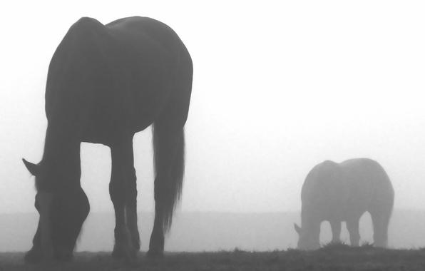 Картинка животные, туман, креатив, лошади, nature, fog, кони horses