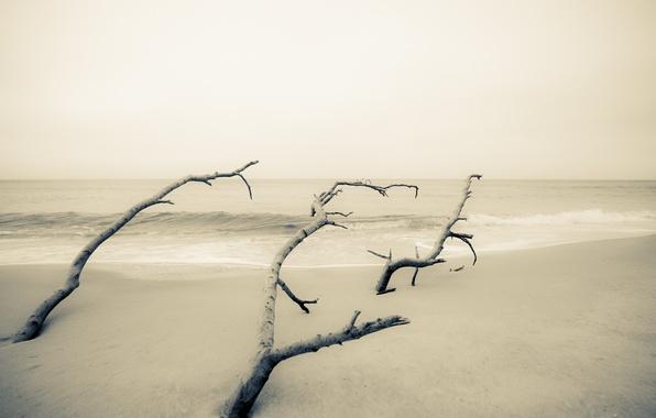 Картинка море, деревья, минимализм