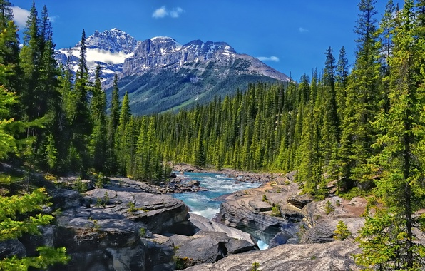 Картинка лес, деревья, горы, река, скалы, Канада, Альберта, Alberta, Canada, Mistaya River