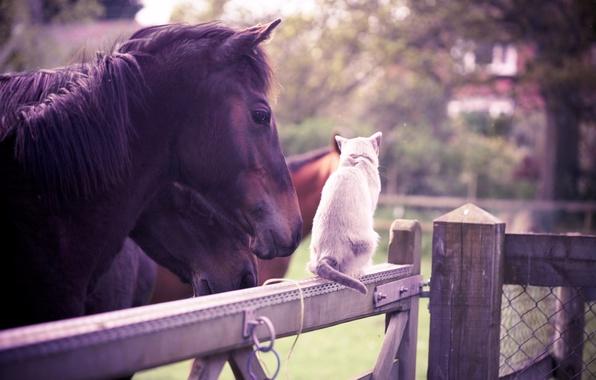 Картинка кошка, животные, лето, лошадь, забор, сад, дружба, белая, оливия белл