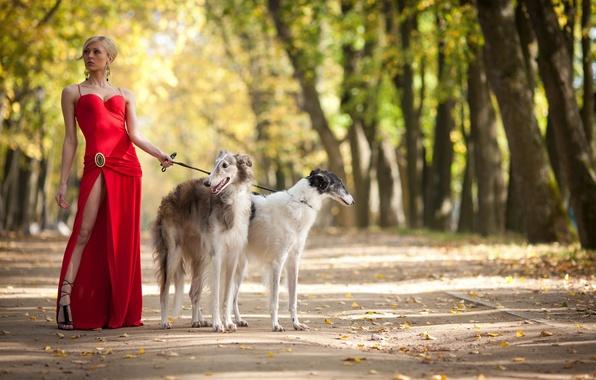 Картинка девушка, парк, собака, прогулка