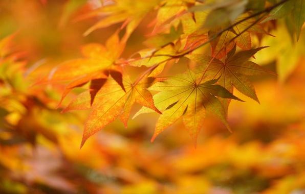 Картинка осень, листья, макро, настроение, жёлтые